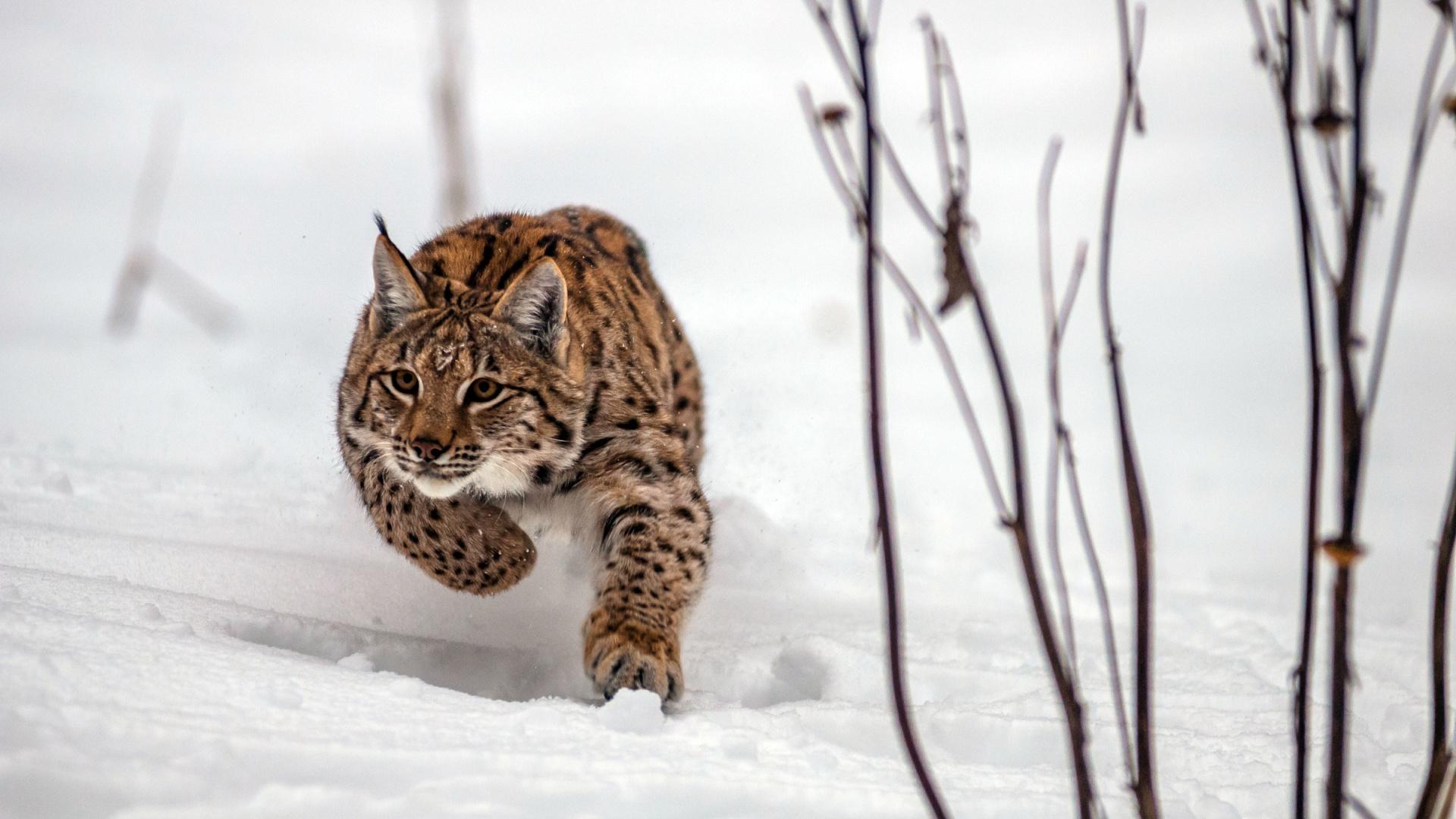 © Tomas Hulik WWF