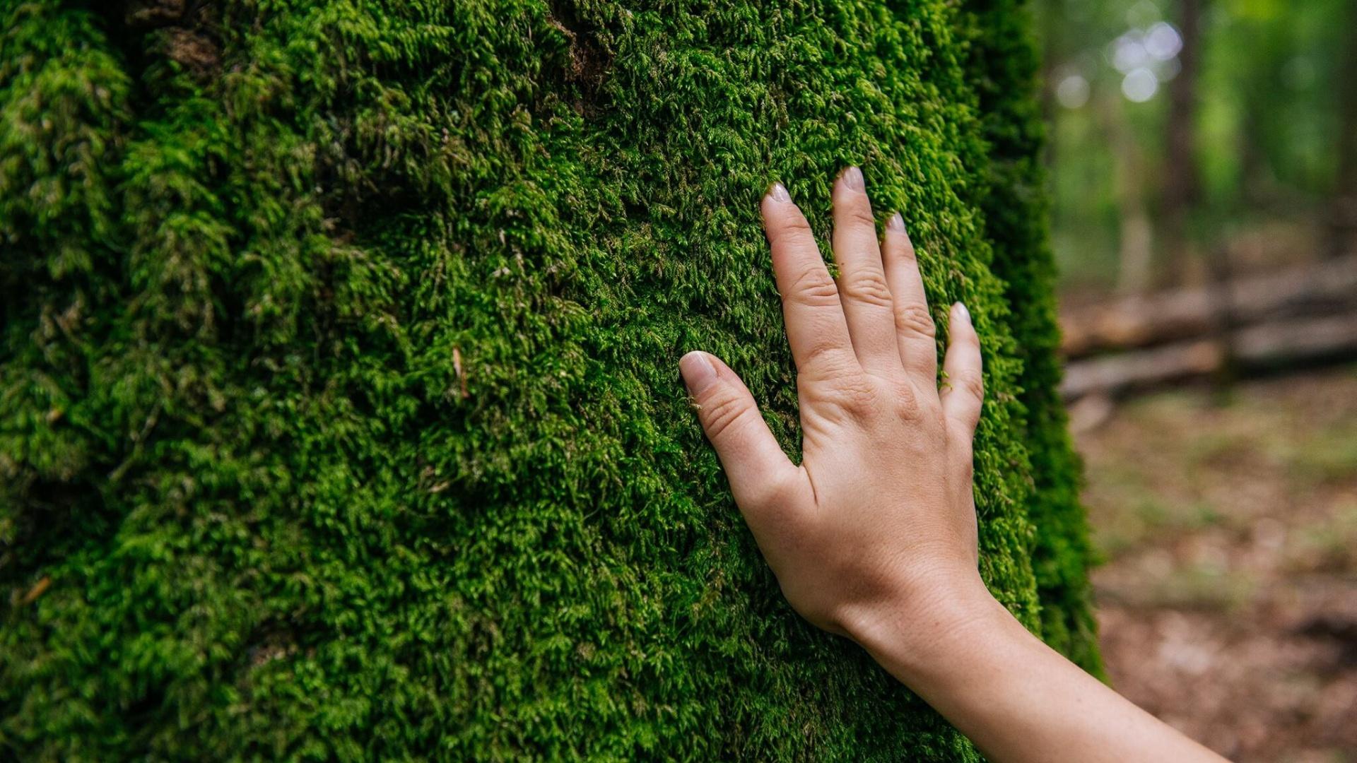mana-atinge-copac-doru-oprisan-1920x1080
