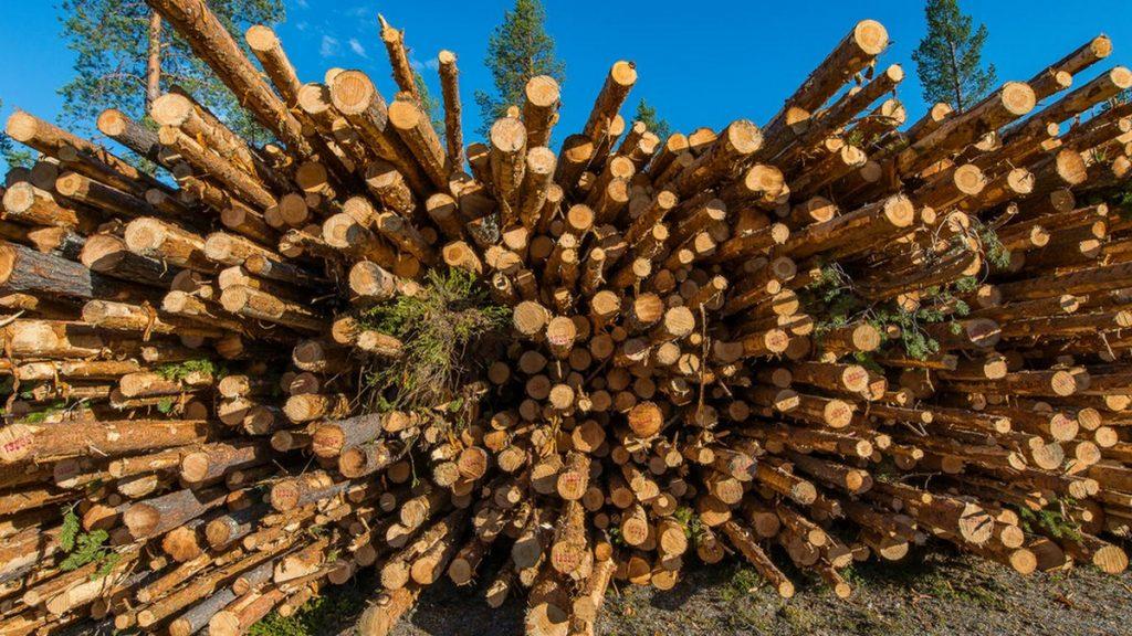 timber___ola_jennersten__wwf_sweden_2